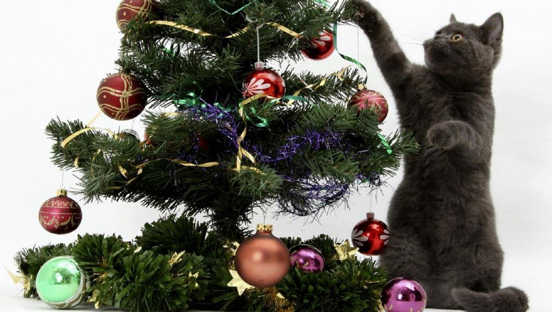 Как отучить кошку лазить на ёлку?